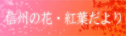 信州の花・紅葉だより