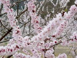 信州は花盛り