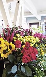 色とりどりの花が並ぶ