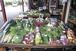 旬の新鮮野菜が勢ぞろい