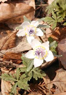 身近な春の訪れ
