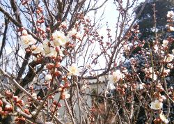 百花繚乱の季節へ