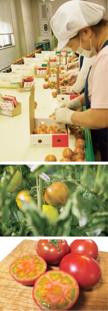 軽井沢町から世界へ~アメーラトマト