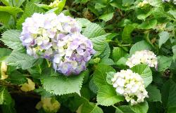 季節の花の開花遅れ