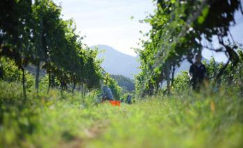 「日本ワイン」と「国産ワイン」