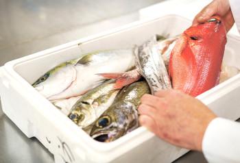 ▲伊豆・川奈港直送の鮮魚を使用